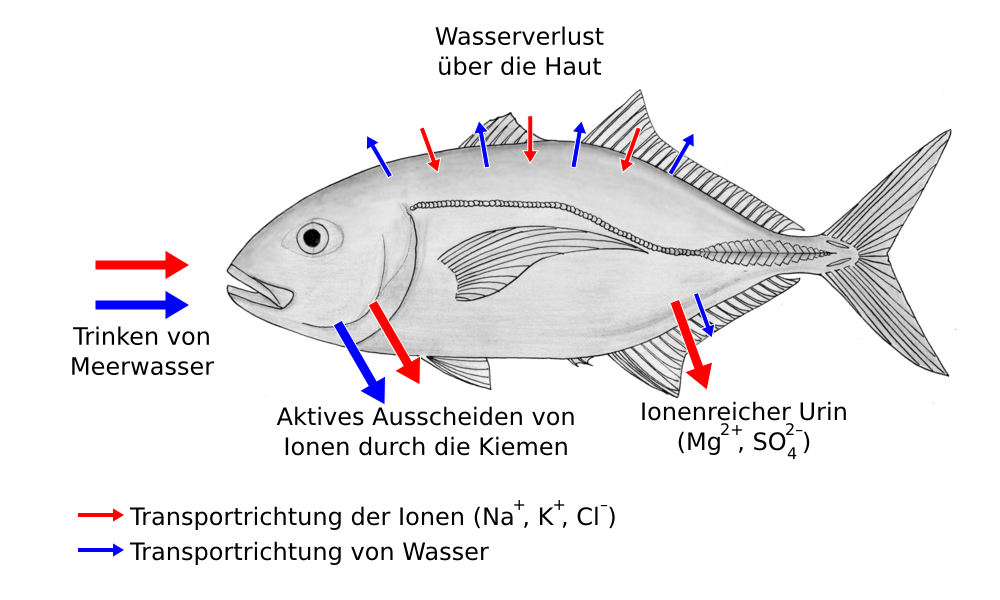 Osmose Fische
