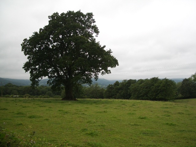 File:Pasture land with oak tree, after rain - geograph.org.uk - 1432125.jpg