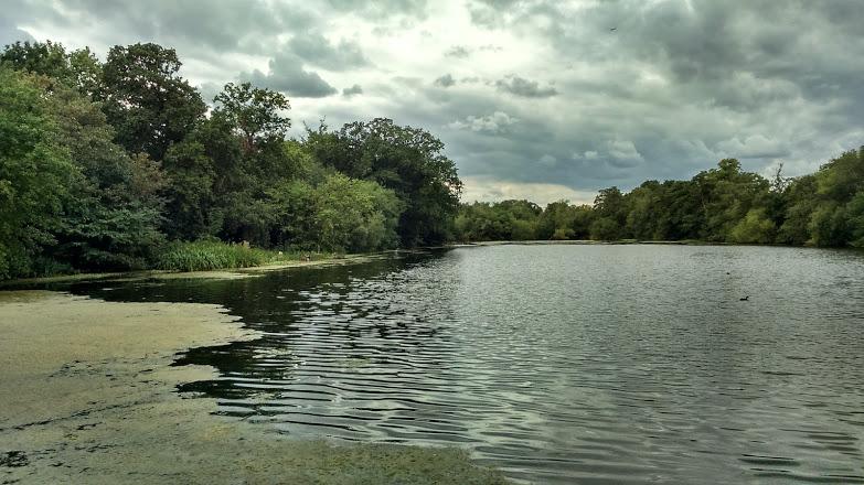 Perch Pond, Wanstead Park