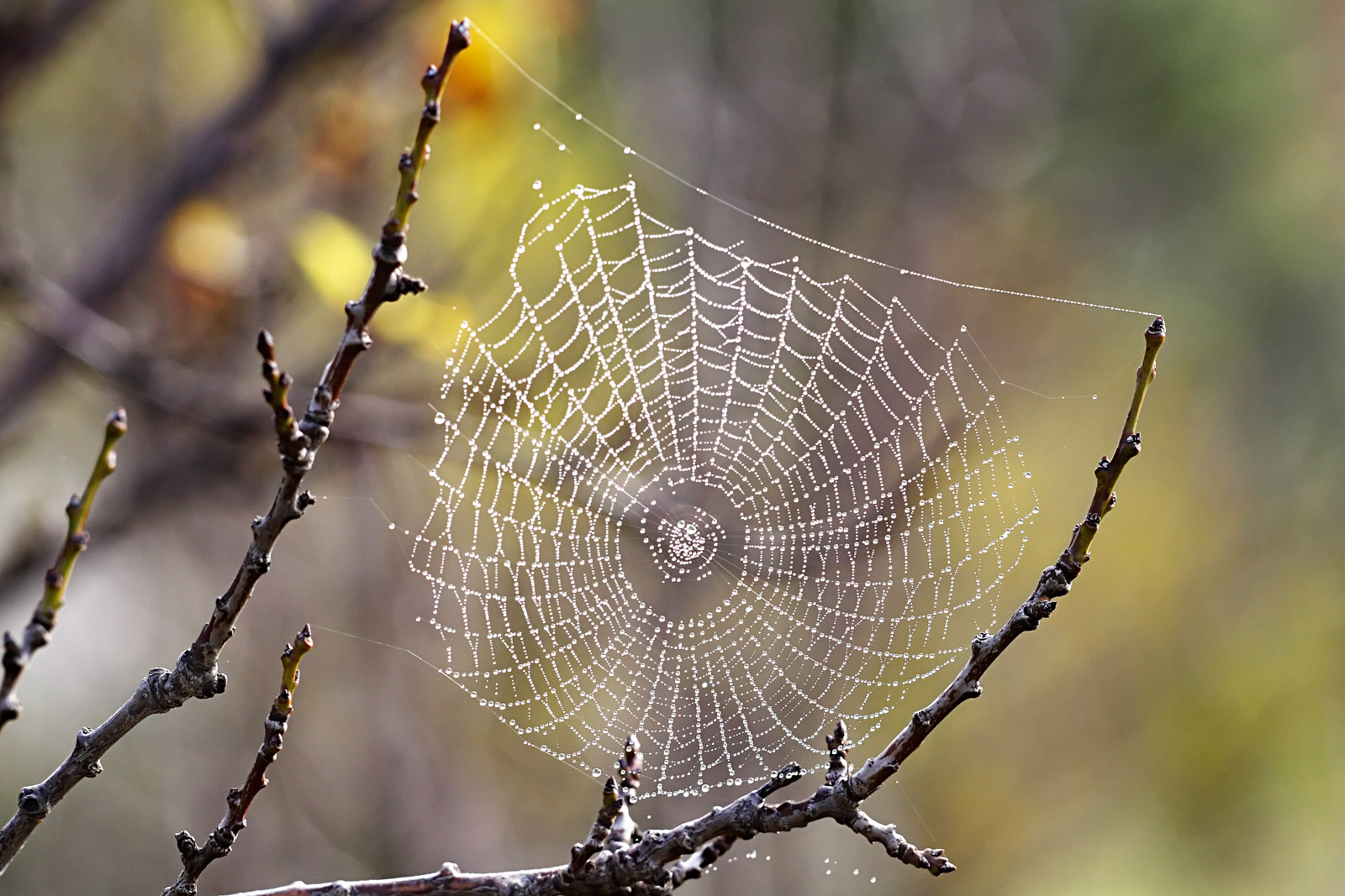 Beautiful Web