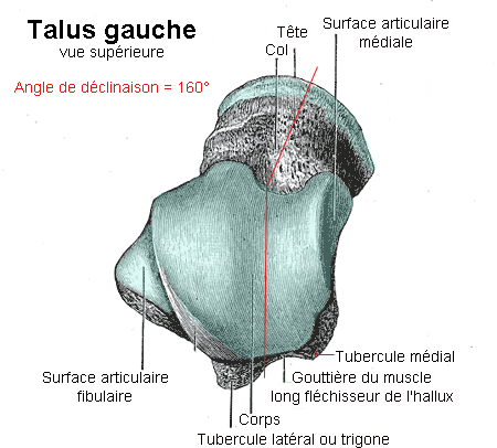File:Talus copie.png - Wikimedia Commons