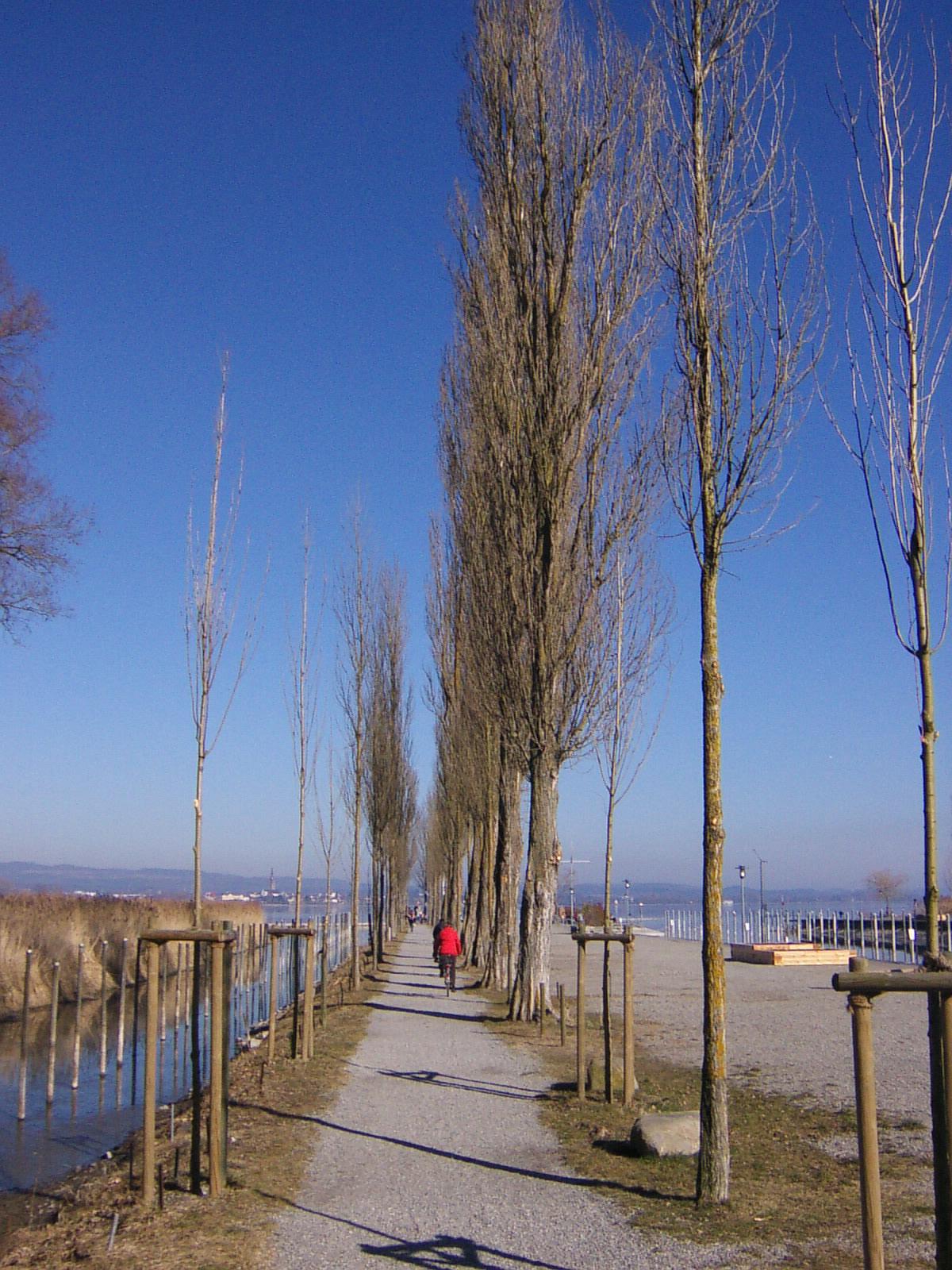 Moos (Bade-Wurtemberg)