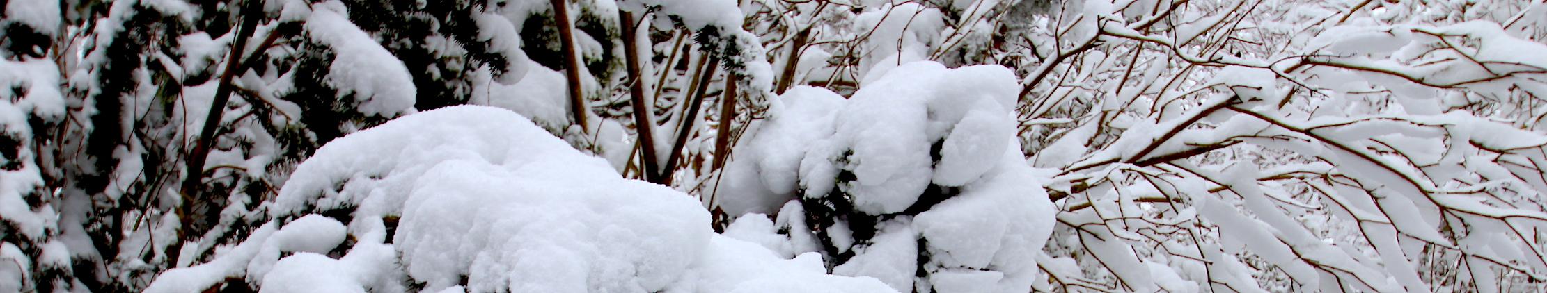 Снег под Парижем.