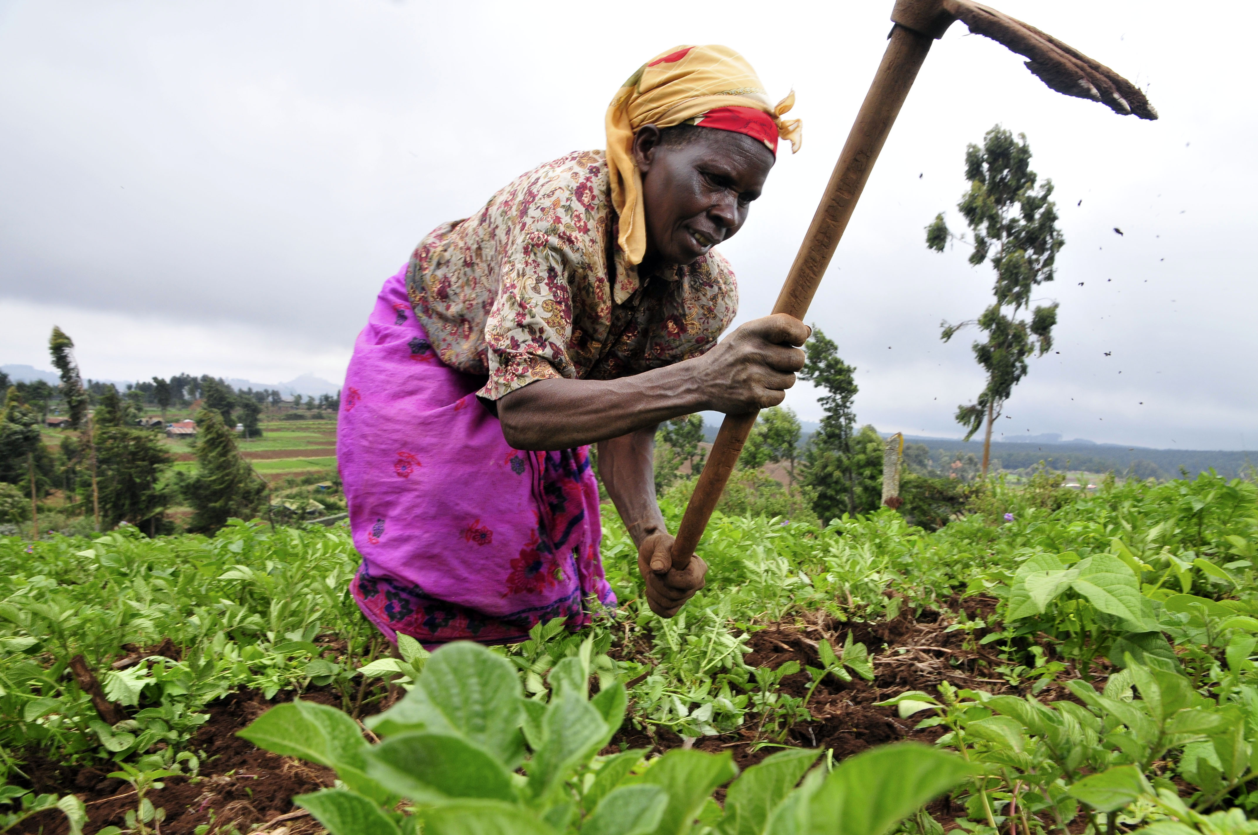 Food security in africa essay