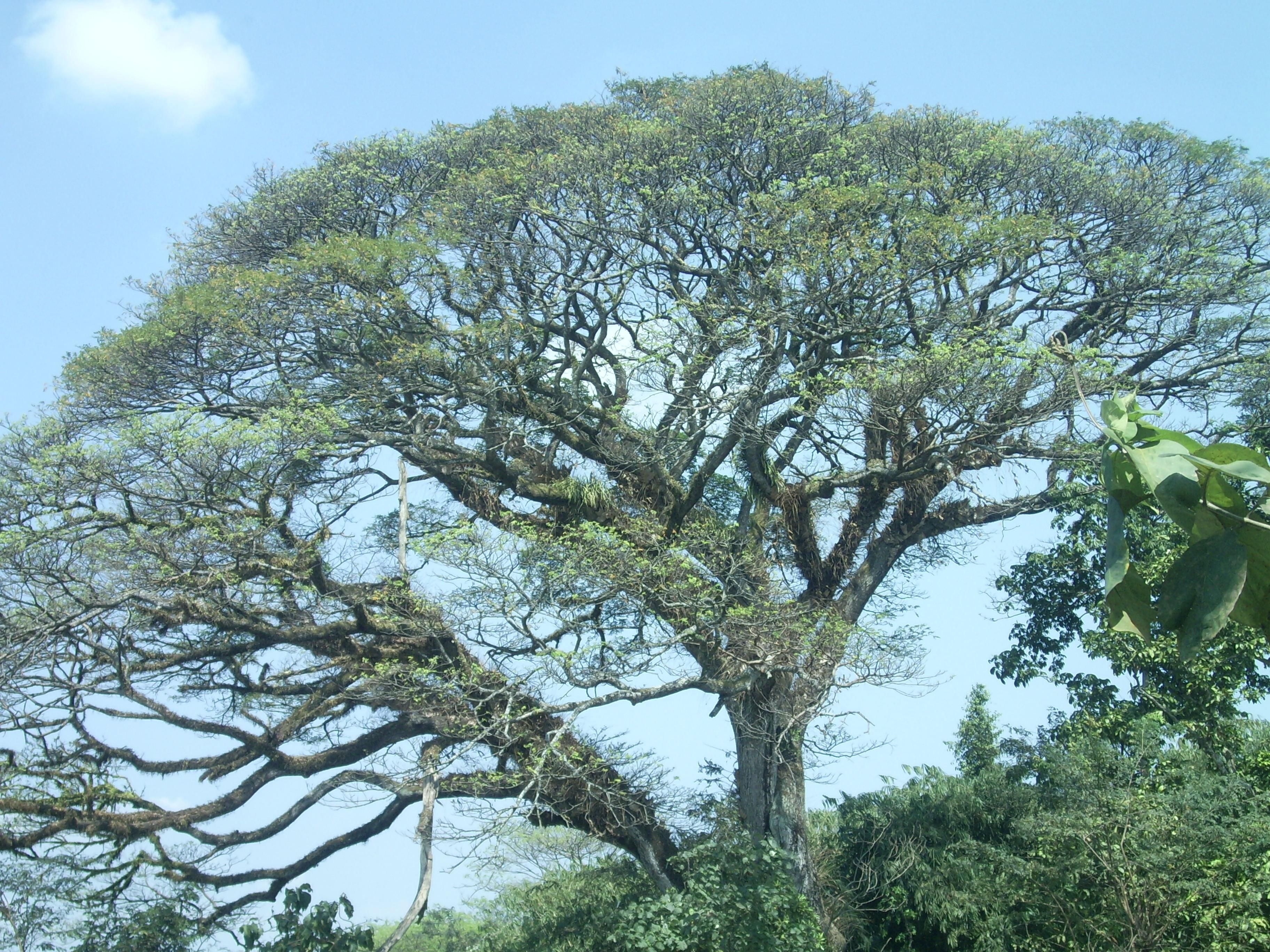 Дачные беседки из дерева фото анализировать