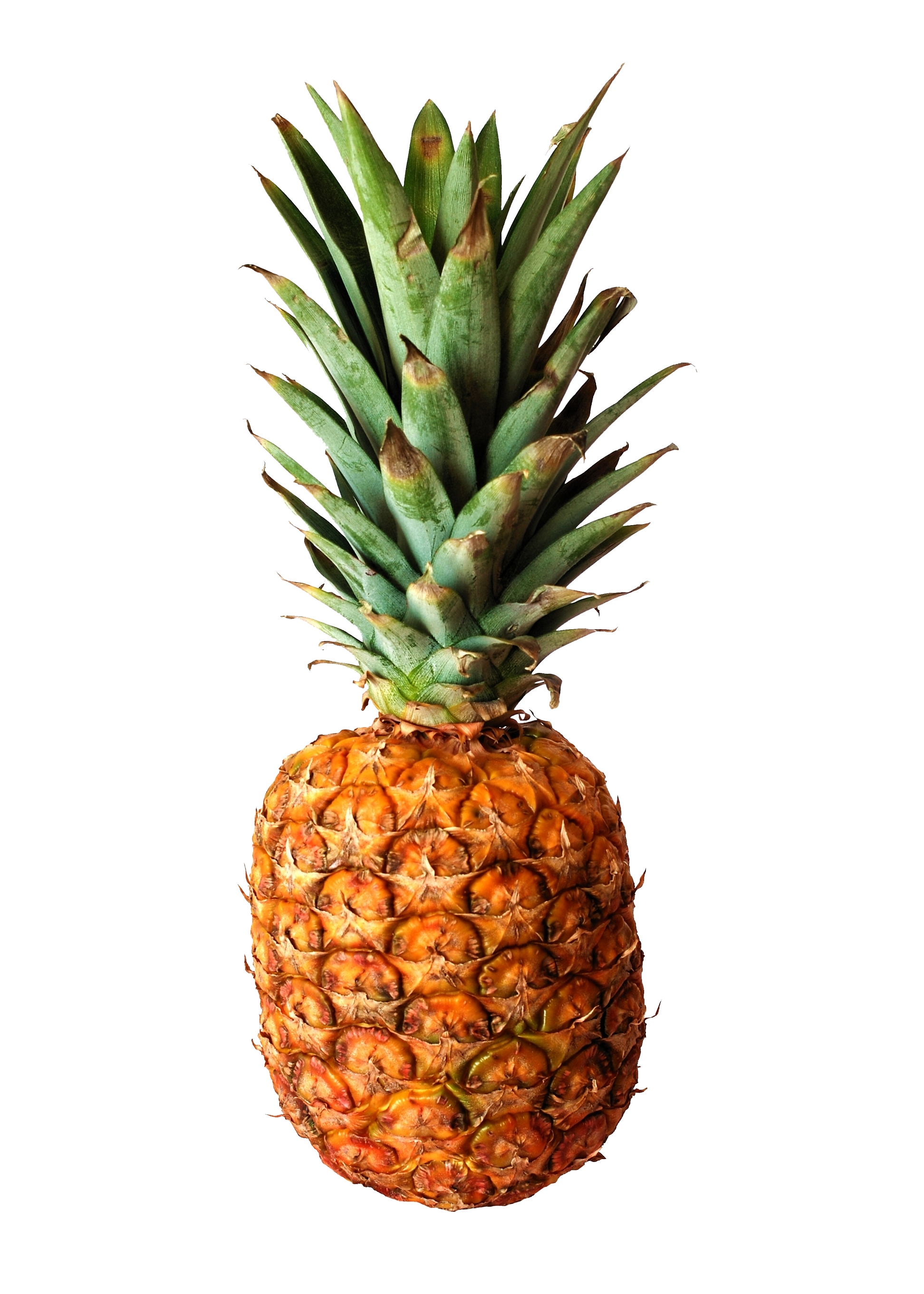 Pineapple of Hospitality
