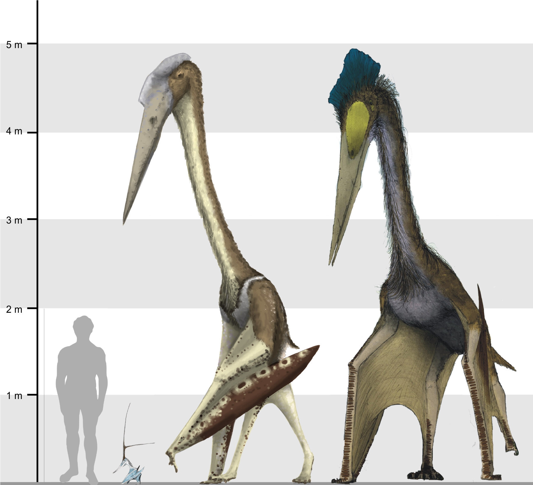 Fichier:Arambourgiania, Nyctosaurus and Quetzalcoatlus ...