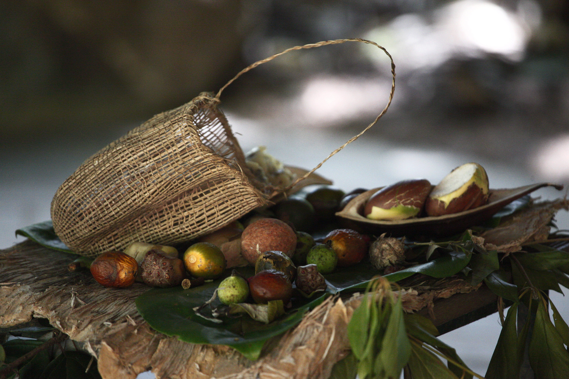 Bush Medicine A Pharmacopoeia Of Natural Remedies