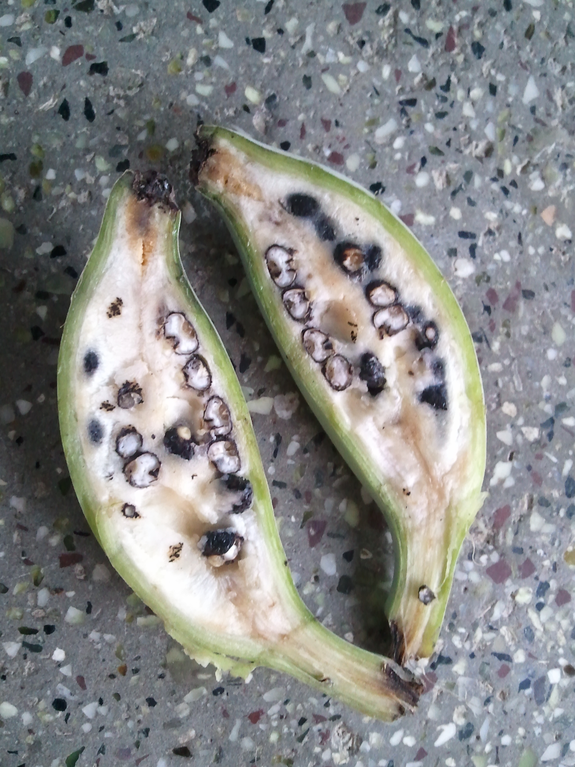 A banana with seeds