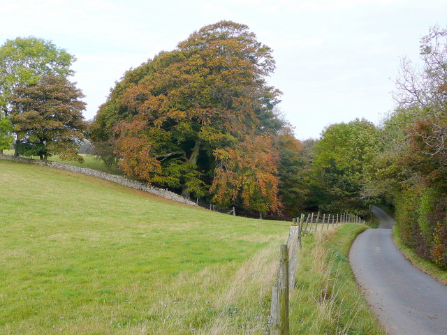 Beeches by Littleworth Wood - geograph.org.uk - 1545905