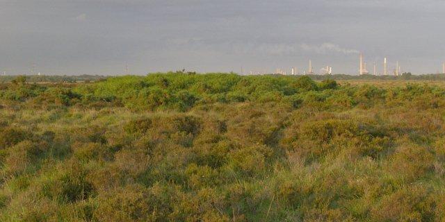 File:Bowl barrow on Beaulieu Hilltop Heath, New Forest - geograph.org.uk - 474456.jpg