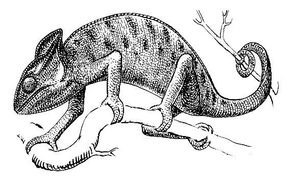 Image Result For Basilisk Lizard Coloring