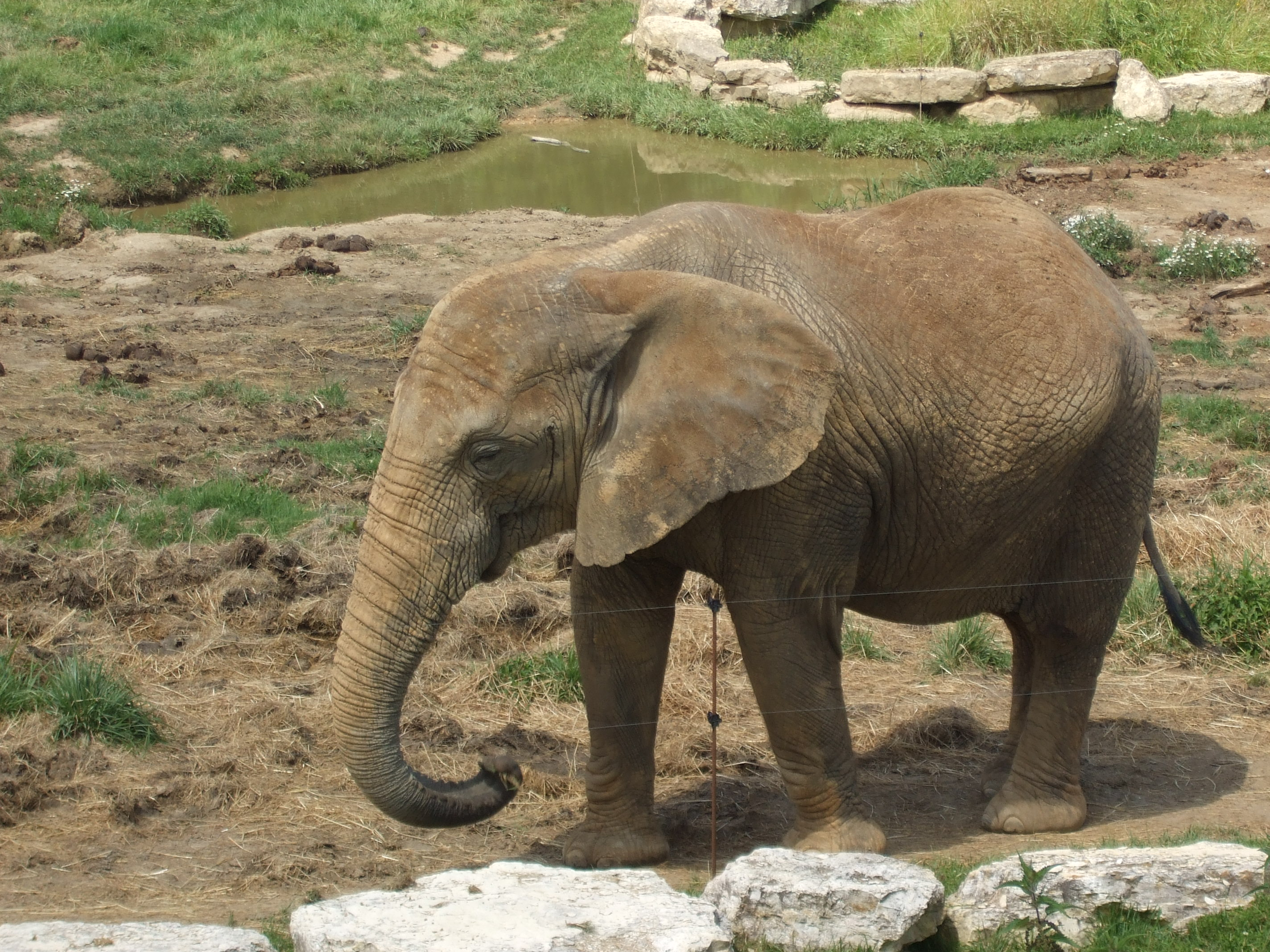 wild animals should not be kept inside a zoo Exotic and wild animals should not be pets 4,435 likes 8 talking about this people should not be keeping exotic animals as  and sold a couple and kept.