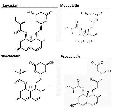 cholesterol essays