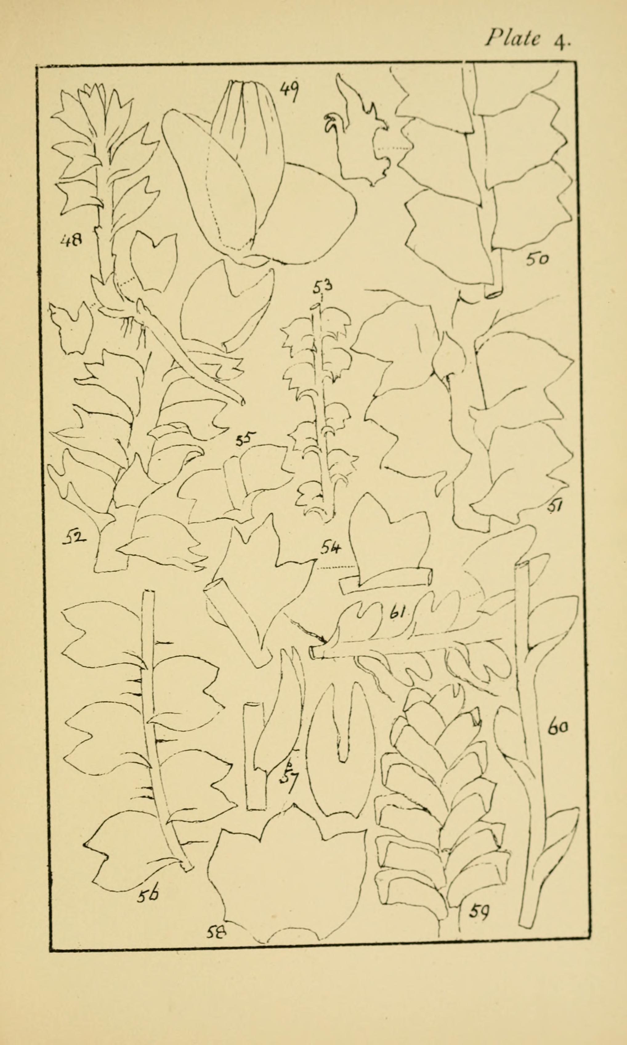 FileHandbook Of British Hepatic Containing Descriptions And Figures The Indigenous Species Marchantia Jungermannia Riccia Anthoceros