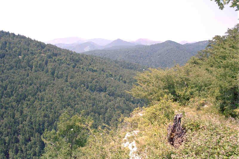 イラティの森 - Wikiwand