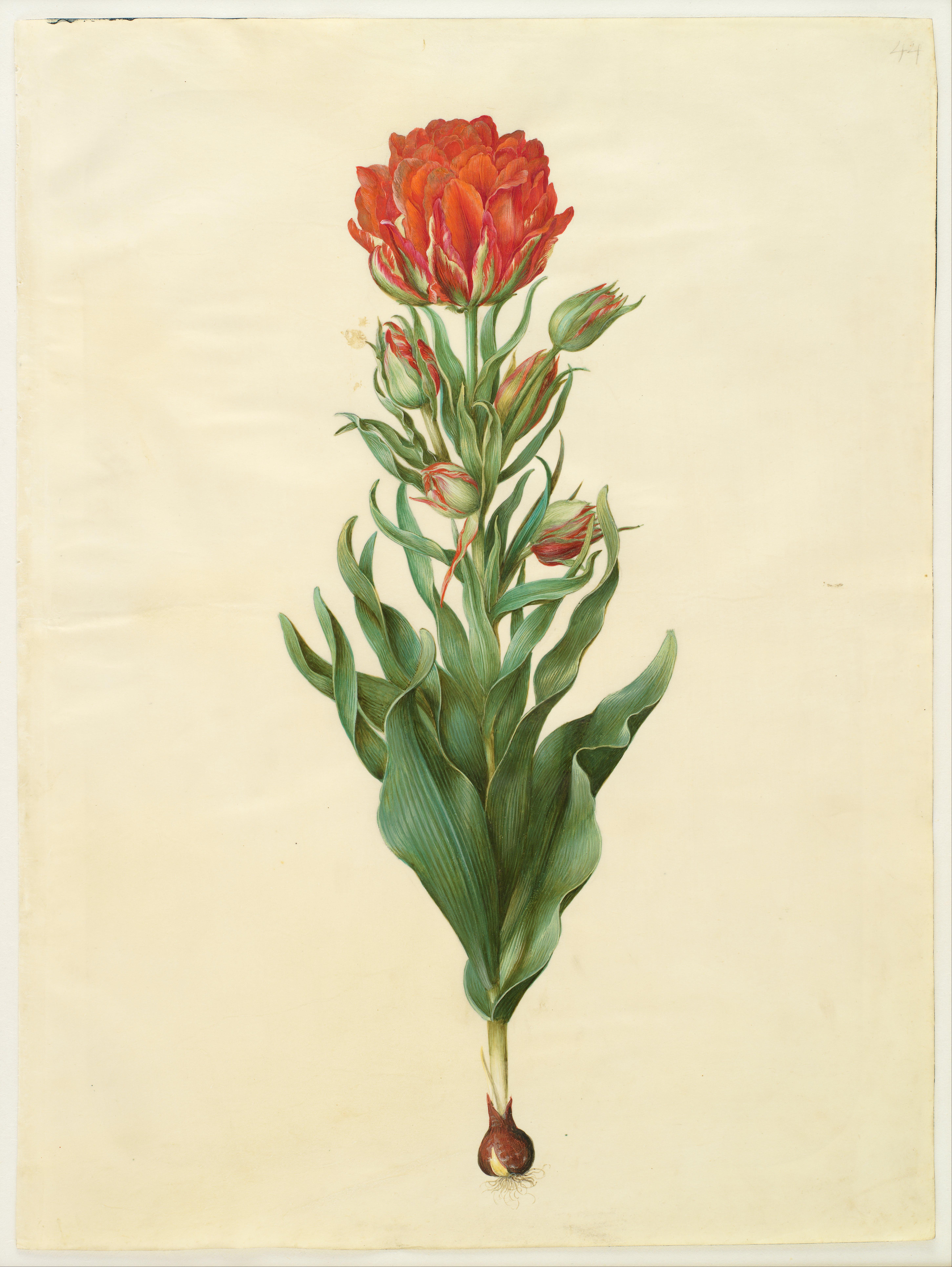 Art Of Floral Design Hunter Rd Edition