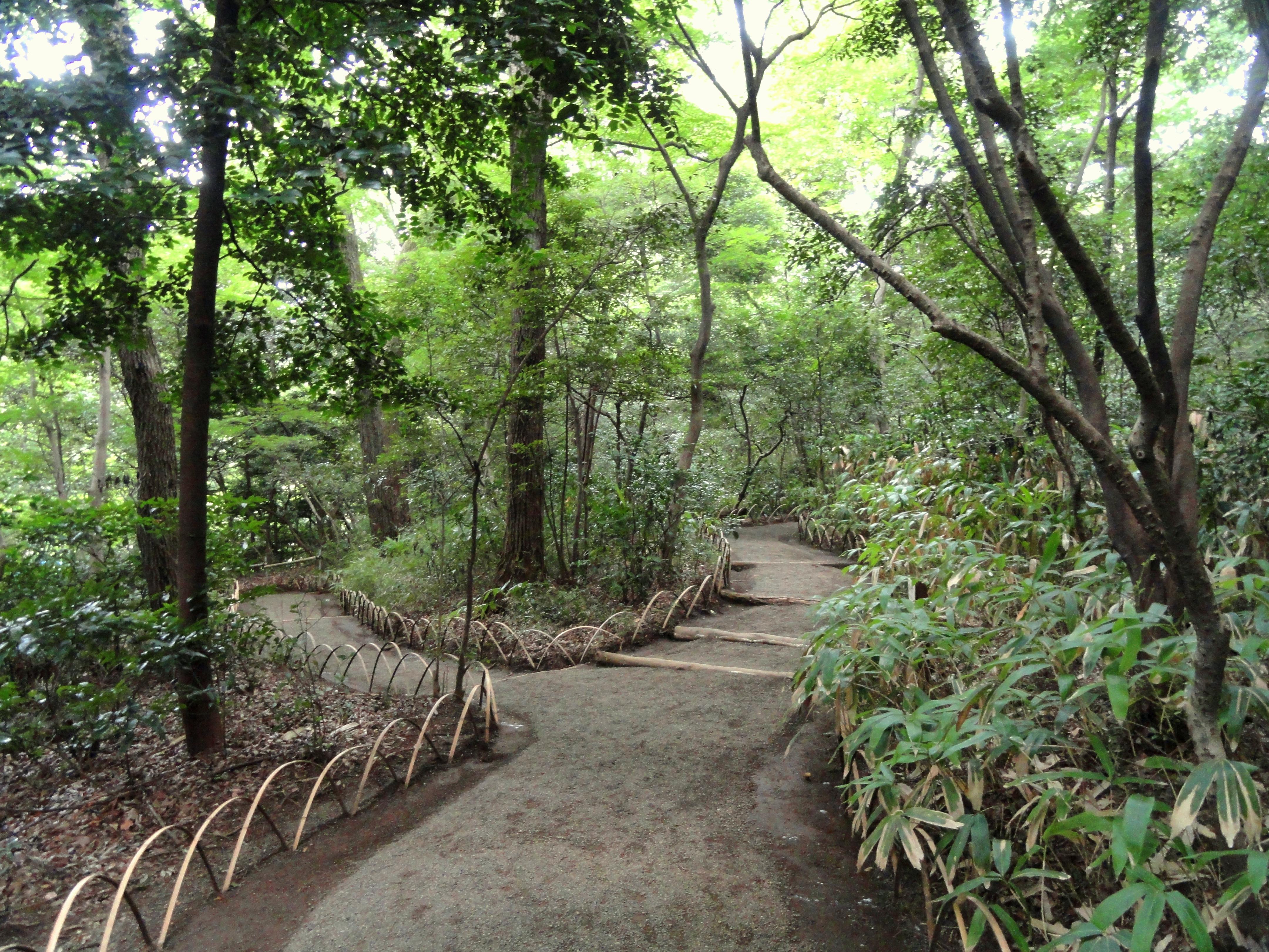 File:Meiji Shrine Inner Garden   DSC04942.JPG