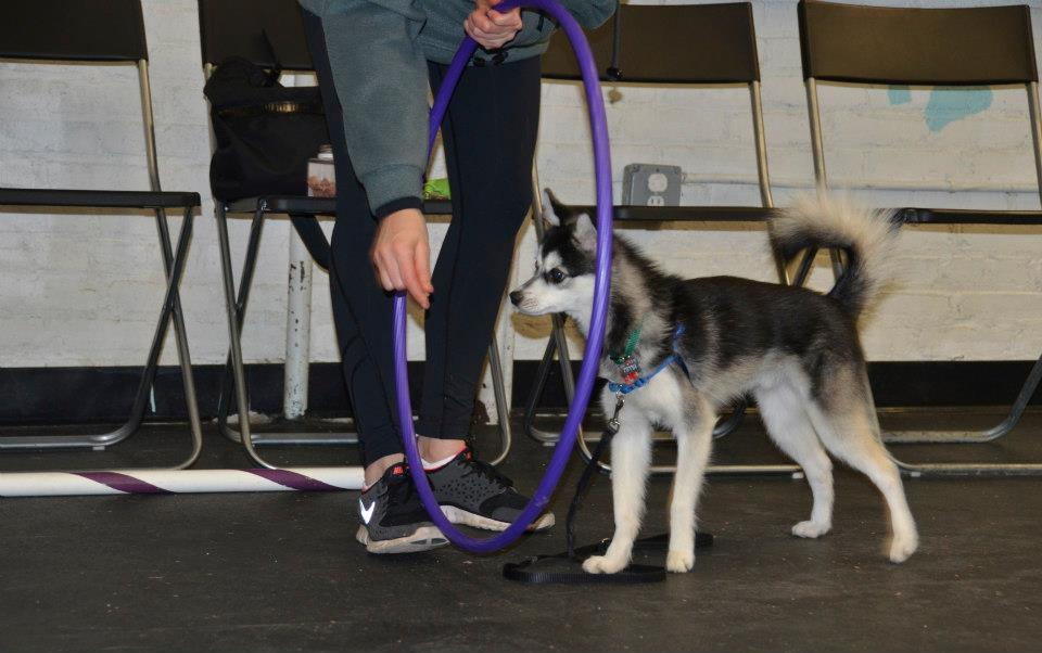 dog rewards training treats