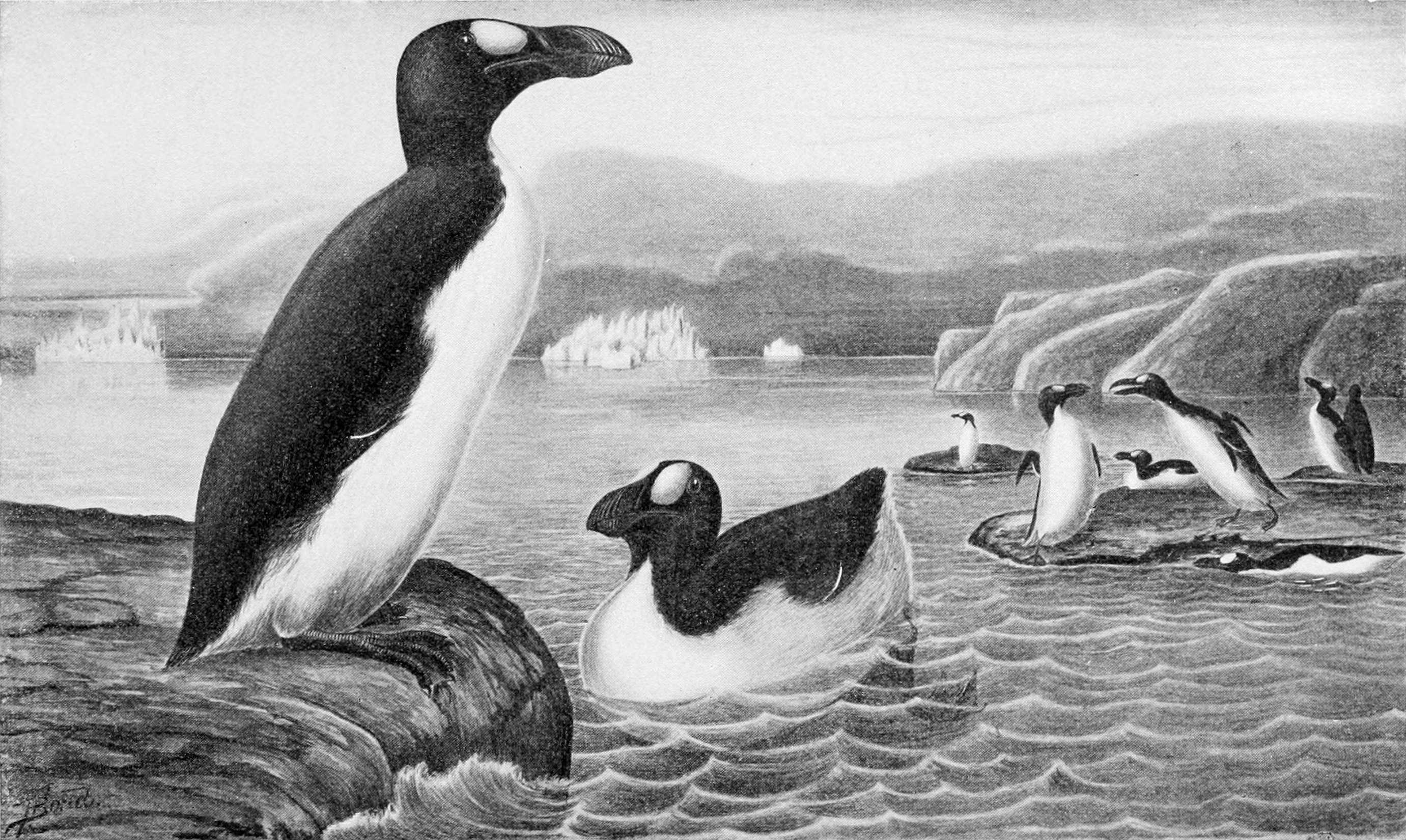 Symbol of American Ornithologists' Union, the extinct [[great auk]]