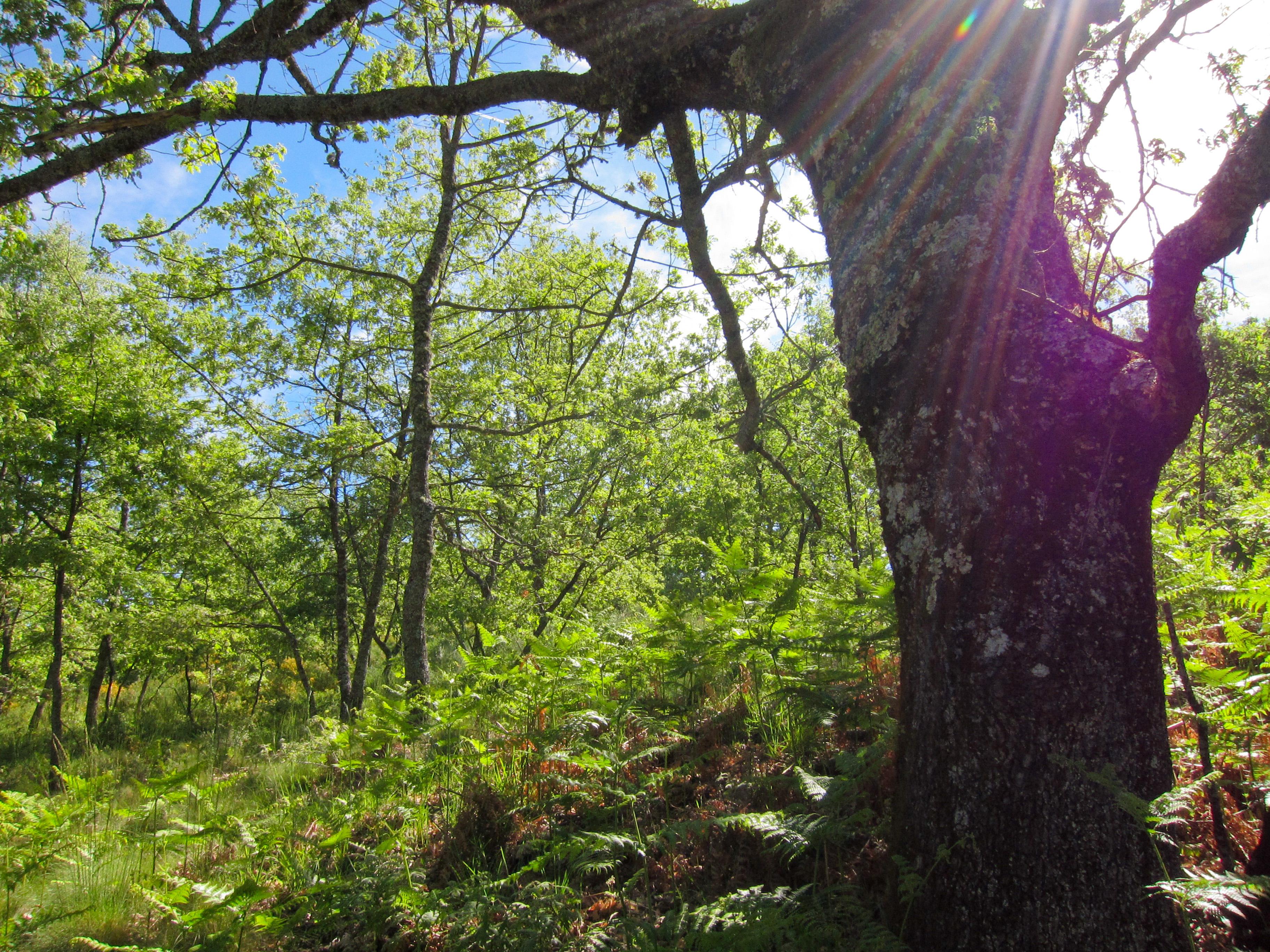 Parque_Natural_de_Montesinho_Porto_Furado_trail_%285732605057%29.jpg