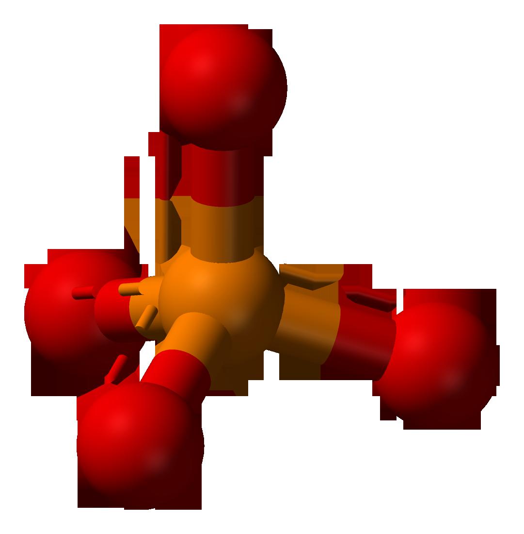 Phosphatase - Wikipedia