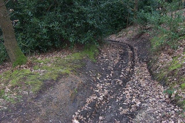 Public Footpath in Elland Park Wood - geograph.org.uk - 702306