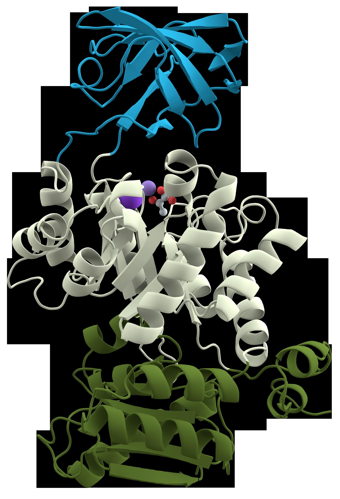 Pyruvate kinase - Wikipedia