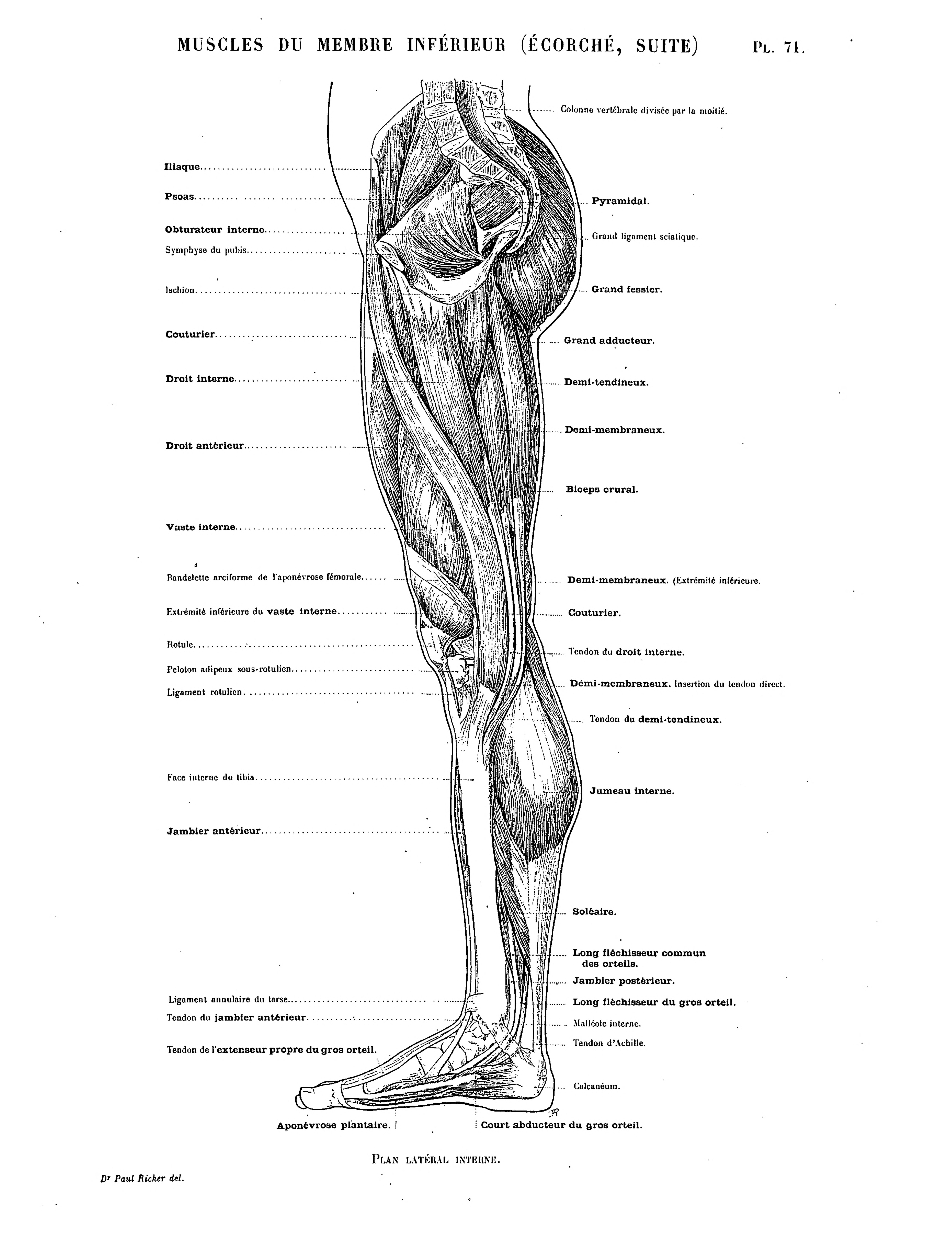 Tolle Siebbeinplatte Zeitgenössisch - Anatomie Ideen - finotti.info