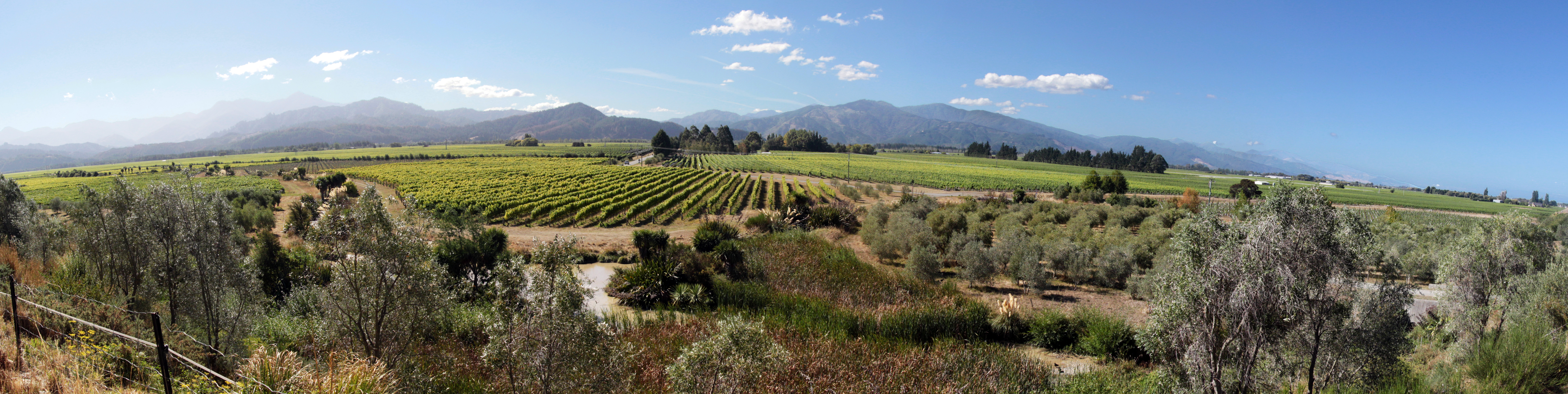 Top_wines_to_try_marlborough_new_zealand_greatlost