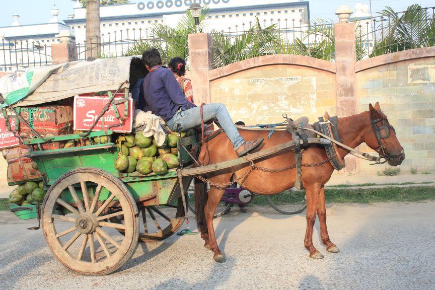 Horse pulling cart