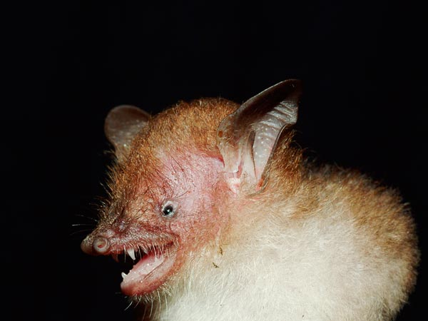Are There Bats In Long Island