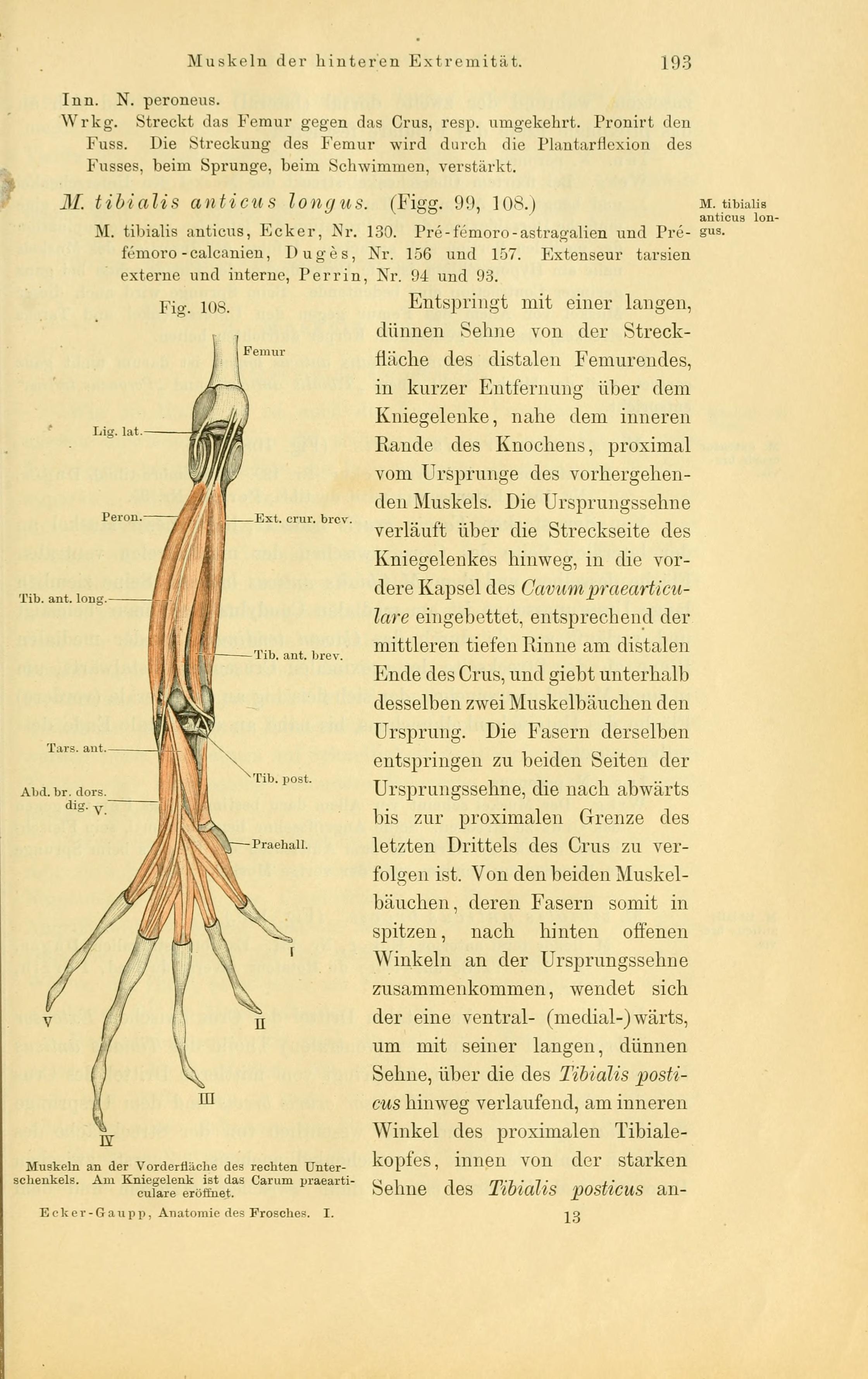 Charmant Anatomie Der Humanbody Bilder - Menschliche Anatomie Bilder ...