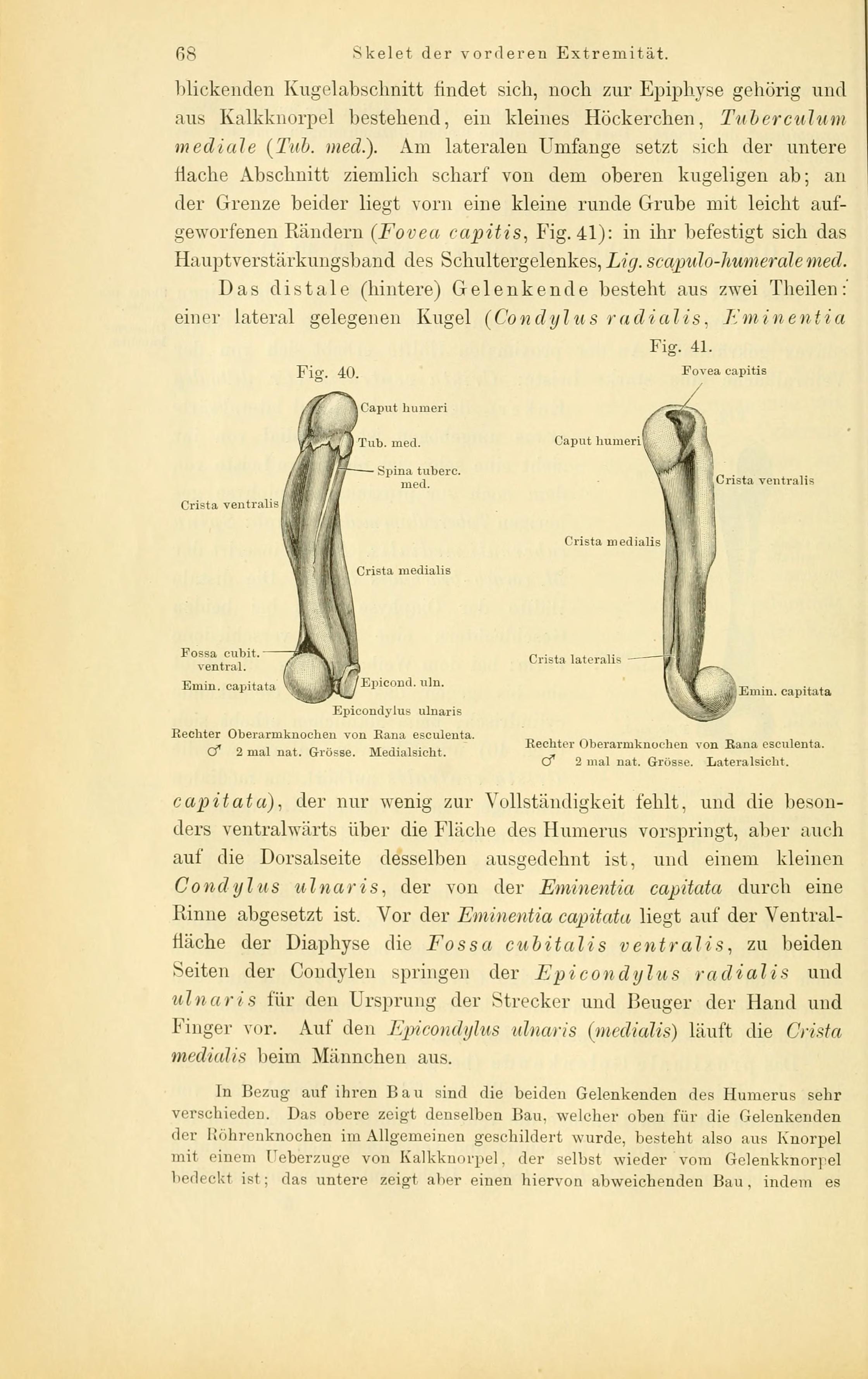 Ungewöhnlich Bezug Auf Die Anatomie Zeitgenössisch - Anatomie Von ...