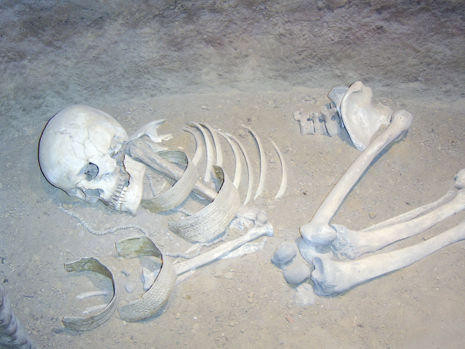 http://upload.wikimedia.org/wikipedia/commons/7/7b/Biskupin_012_women_skeleton.jpg