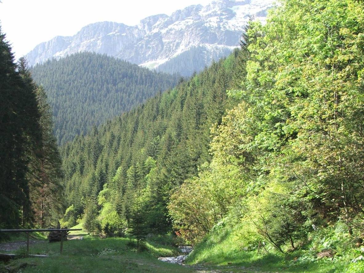 Dolina Lejowa (źródło: Wikimedia)
