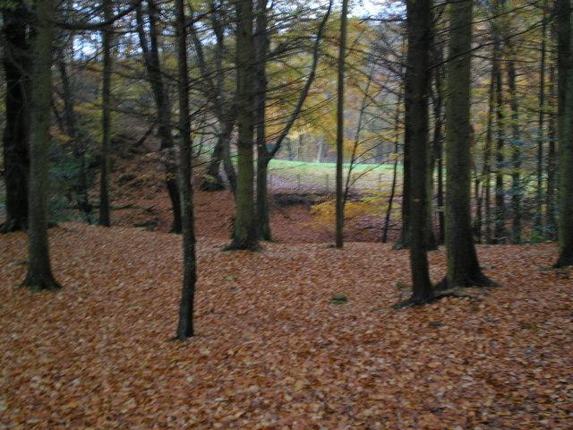 Gelt Woods - geograph.org.uk - 279533