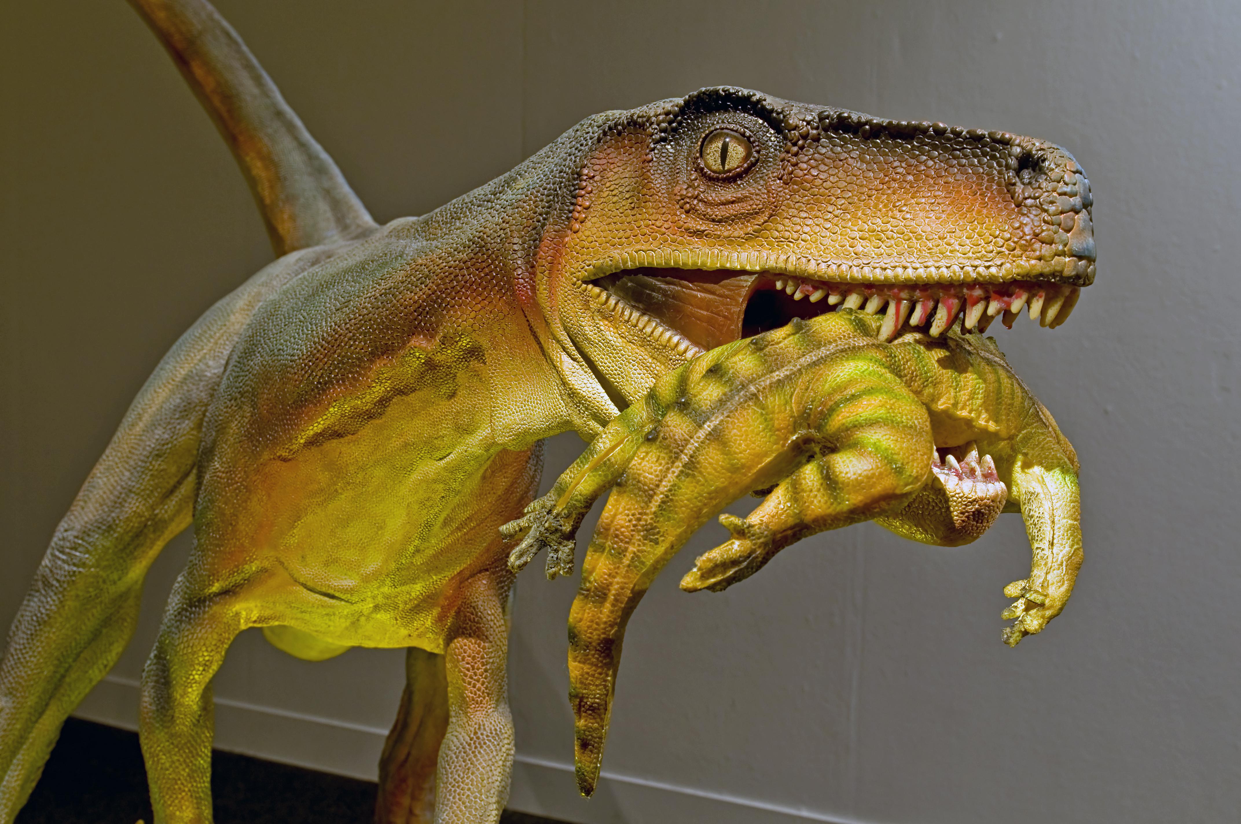 Herrerasaurus_ischigualastensis_DSC_6182.jpg