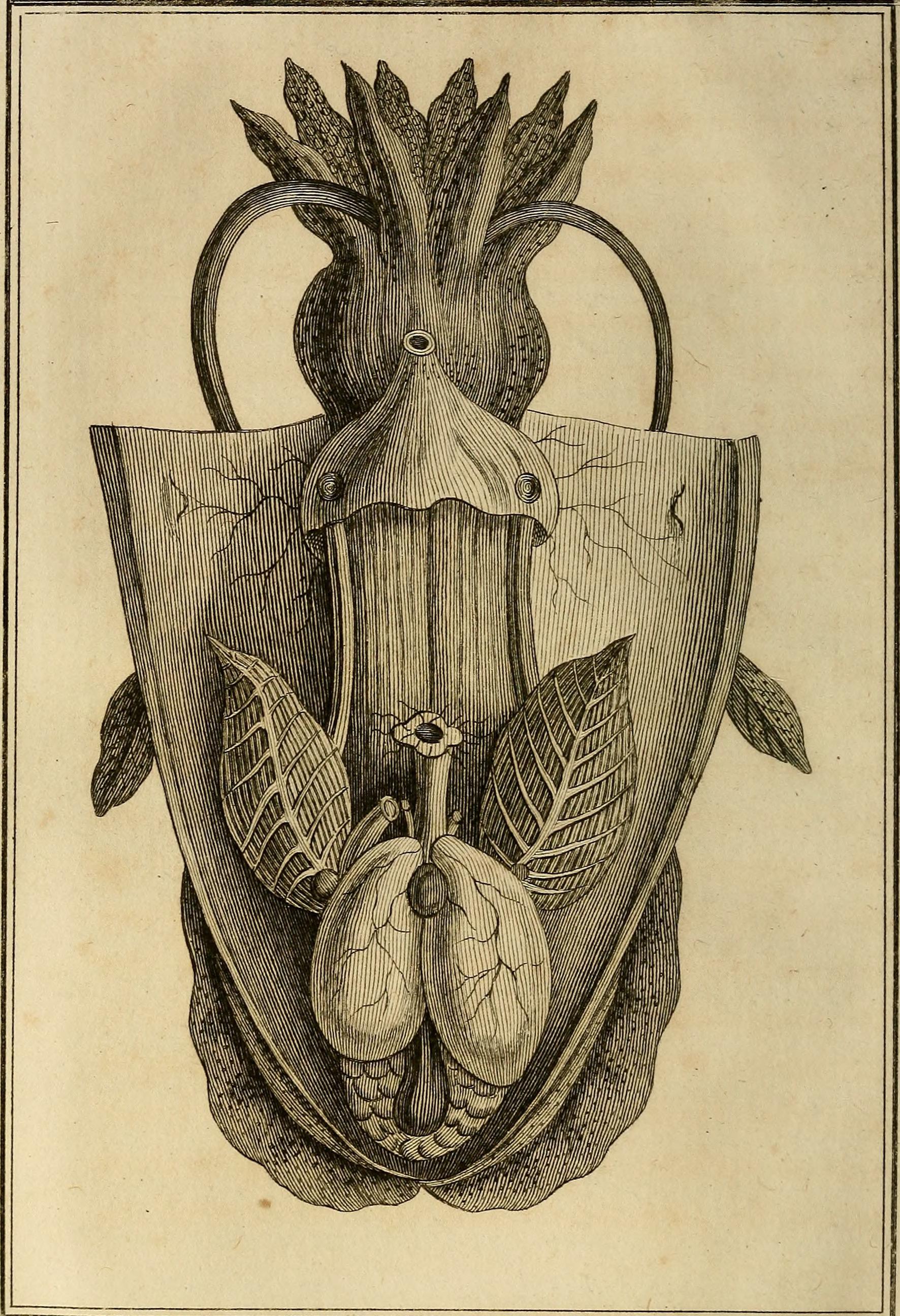 File Histoire Naturelle Générale Et Particuliere Des Mollusques
