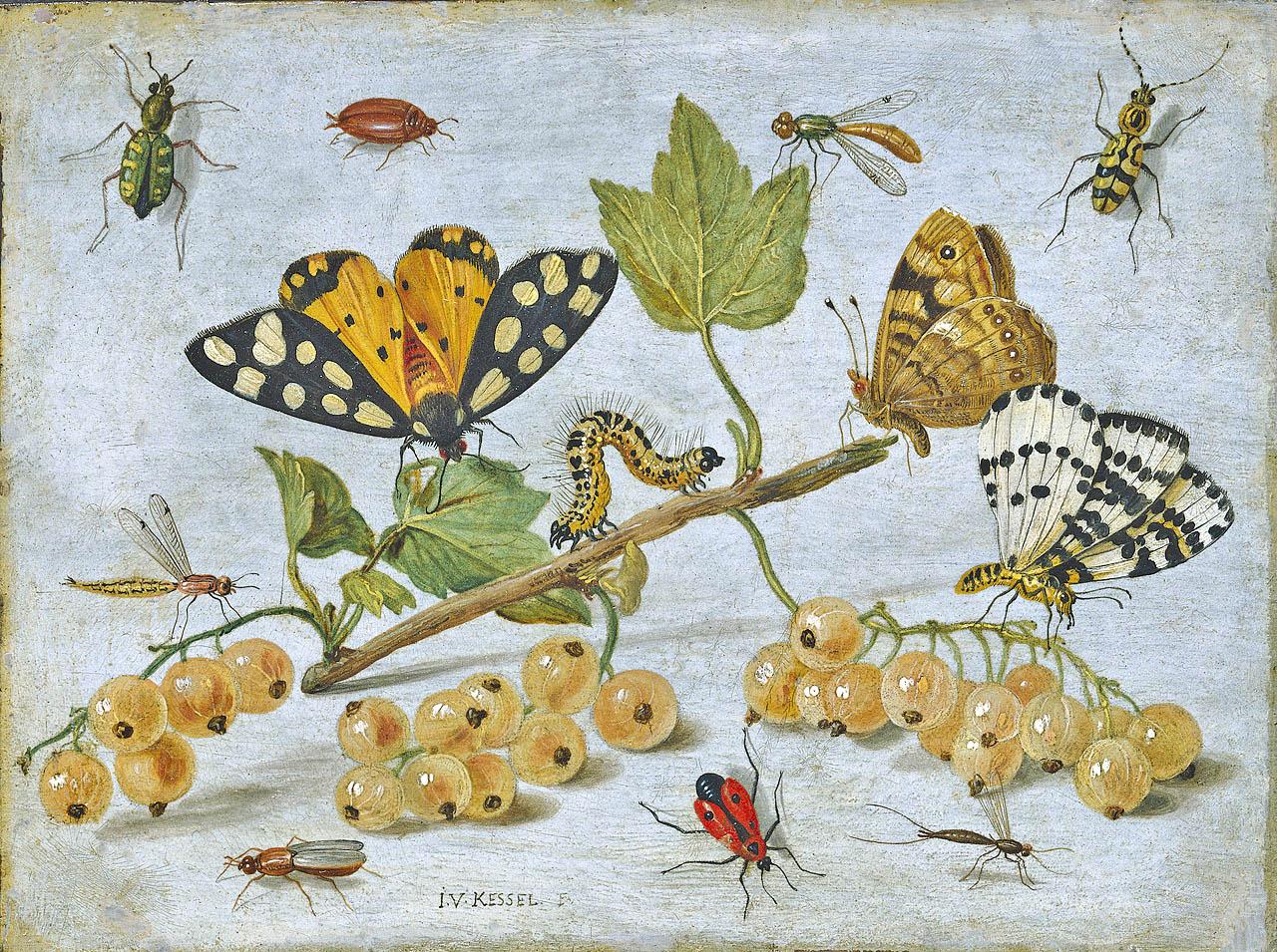 Hotel per insetti per mantenere la biodiversità in giardini e orti, soprattutto in presenza di galline