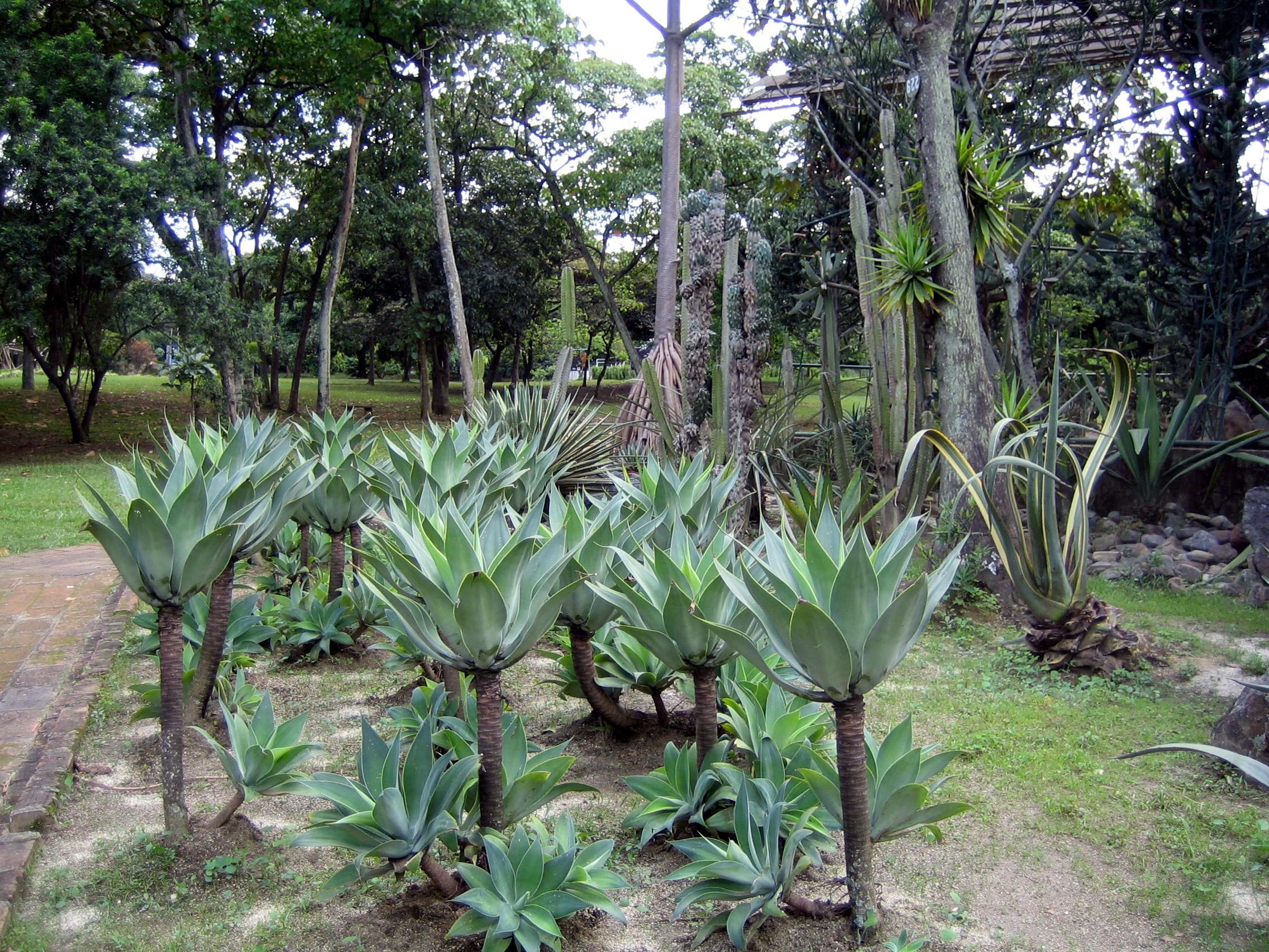 File jardin botanico plantas medell wikimedia commons for Plantas de un jardin botanico