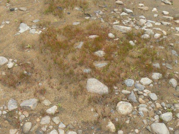 file moss rocks and bare soil by great sacandaga lake