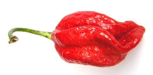 d85118ceffff Naga Viper pepper - Wikipedia