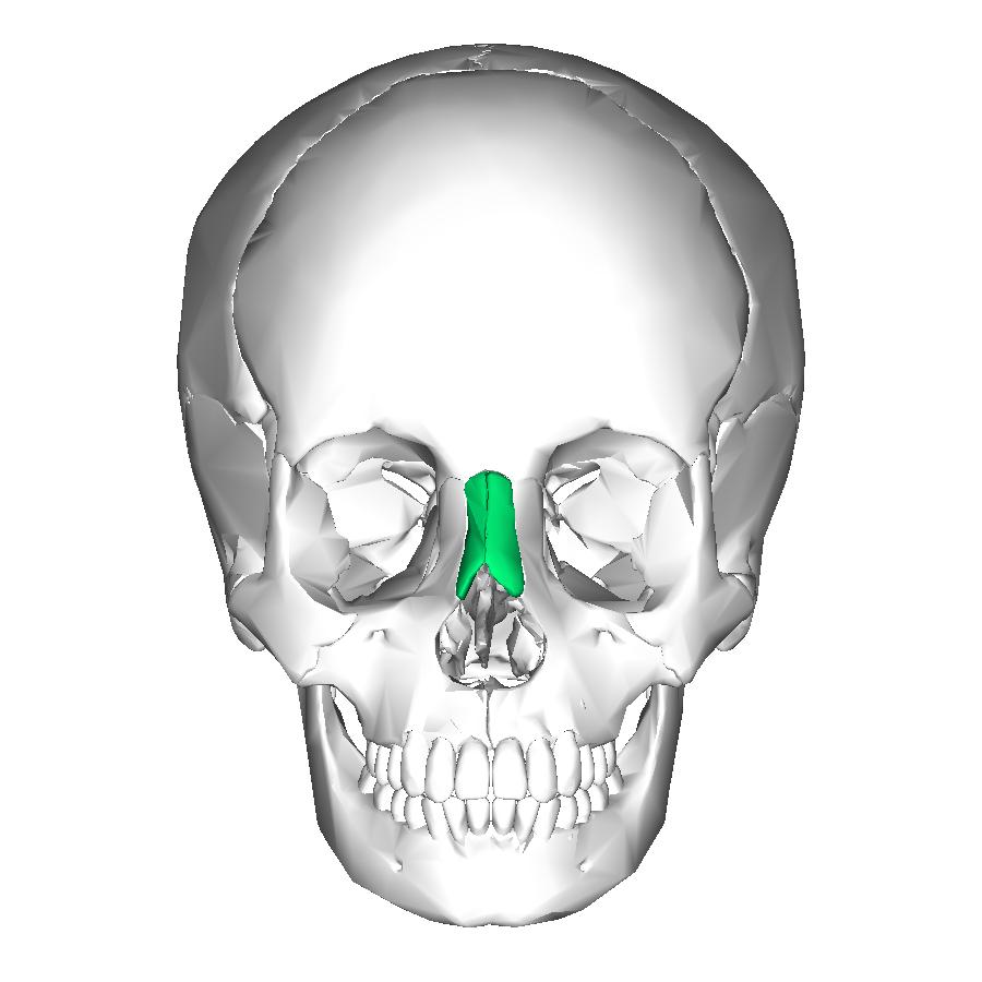 Filenasal Bone Anteriorg Wikimedia Commons