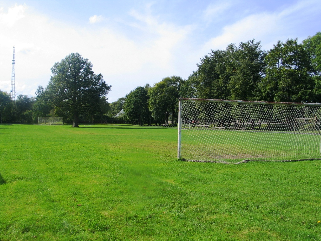 Дуб посреди футбольного поля