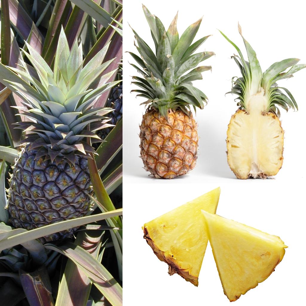 Ananas Wikipédia