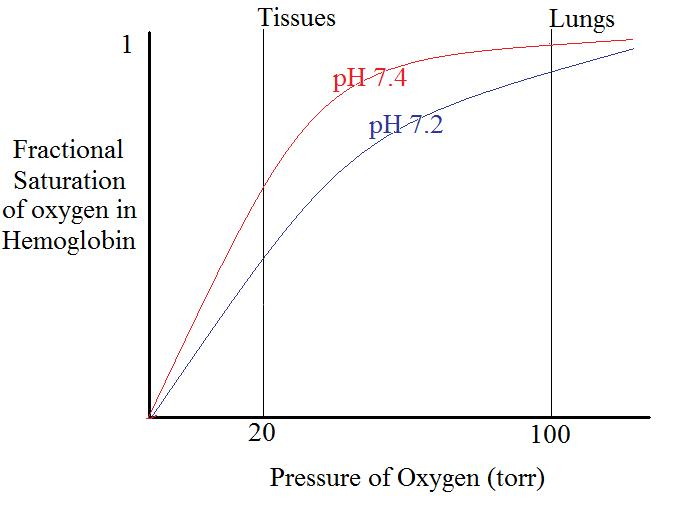 relationship between oxygen concentration and number of red blood cells