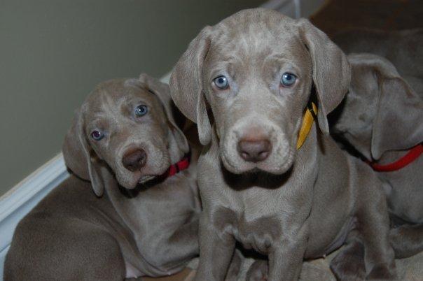 Puppies_after_bath.jpg