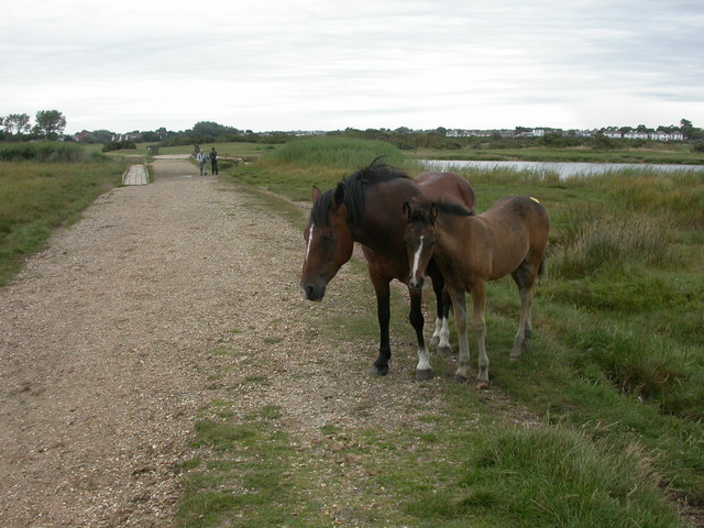 Stanpit Marsh, mare and foal - geograph.org.uk - 1431510
