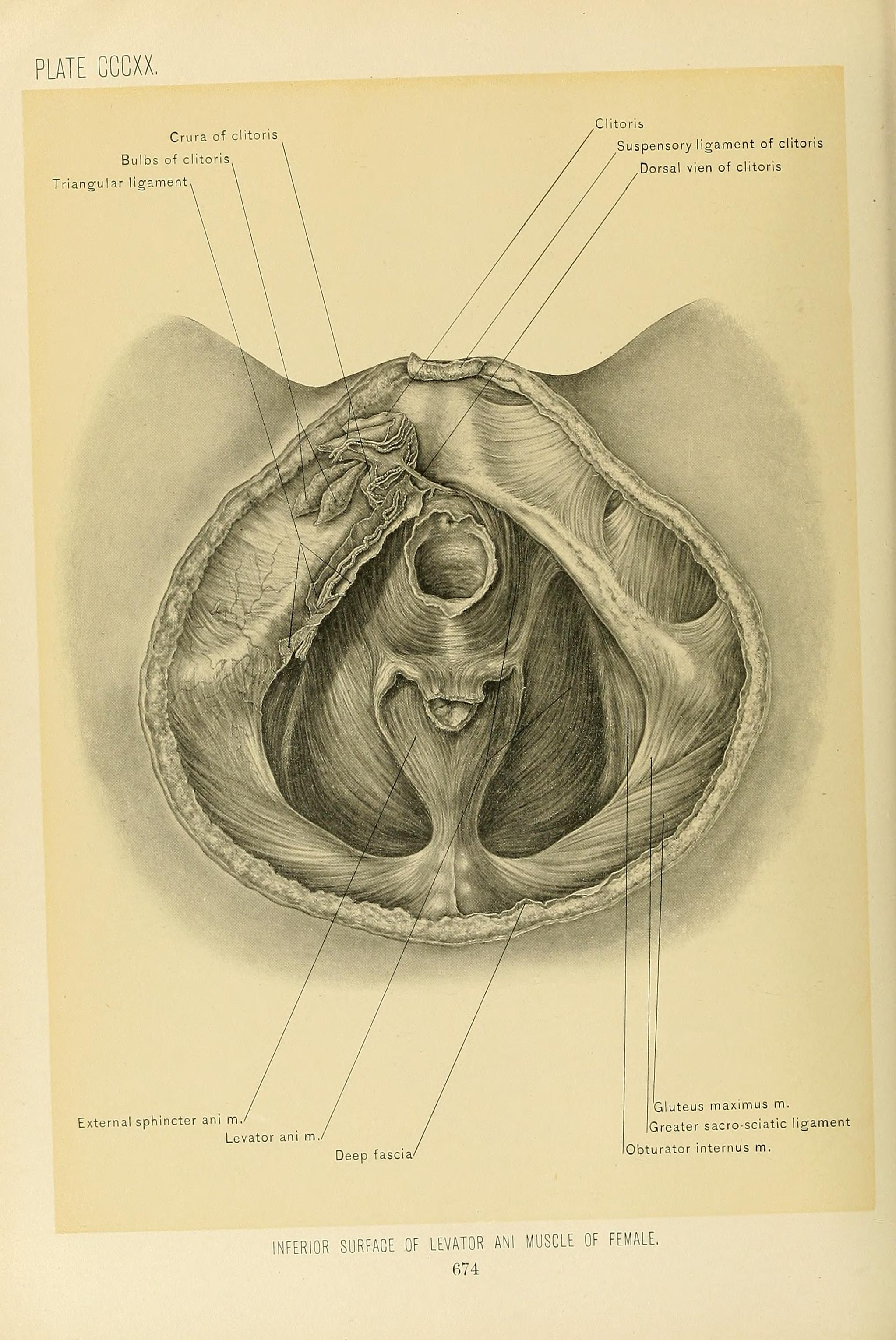File:Surgical anatomy - a treatise on human anatomy in its ...